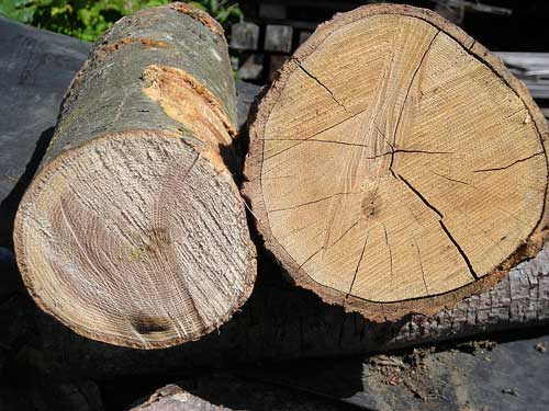 Newly cut green wood on left; seasoned wood on right. Source: Wikipedia.